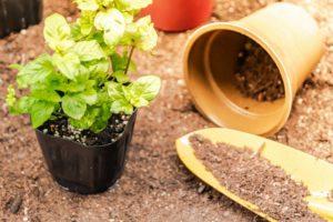 観葉植物の植え替え方法