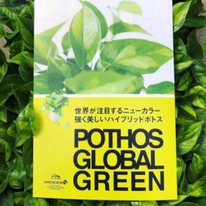 ポトス・グローバルグリーンのリーフレット