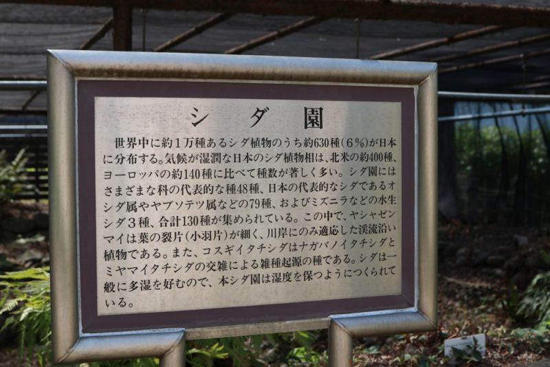 小石川植物園のシダ園