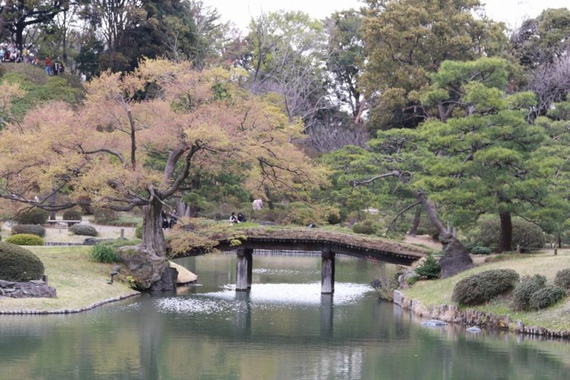 六義園の田鶴橋は横から見るのがおすすめ