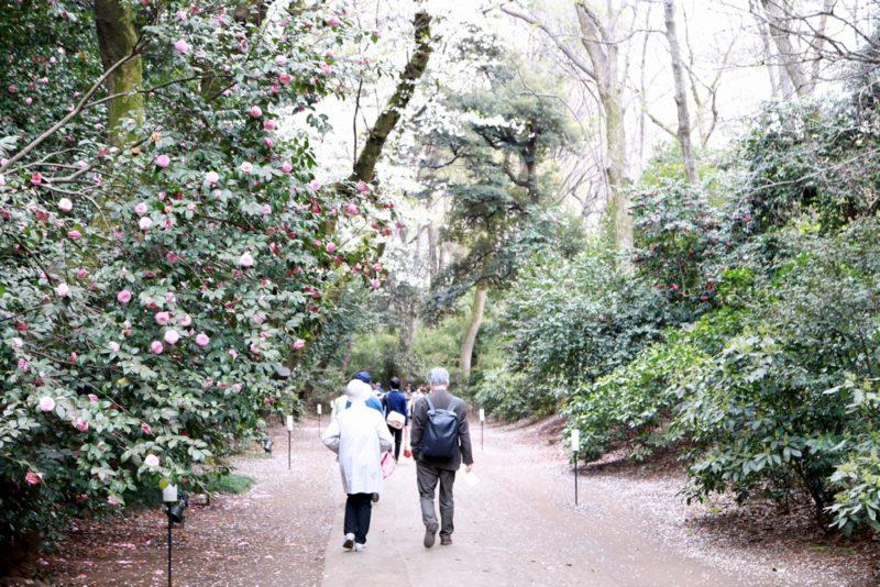 六義園の園内の歩道は基本的に広く足場も良い