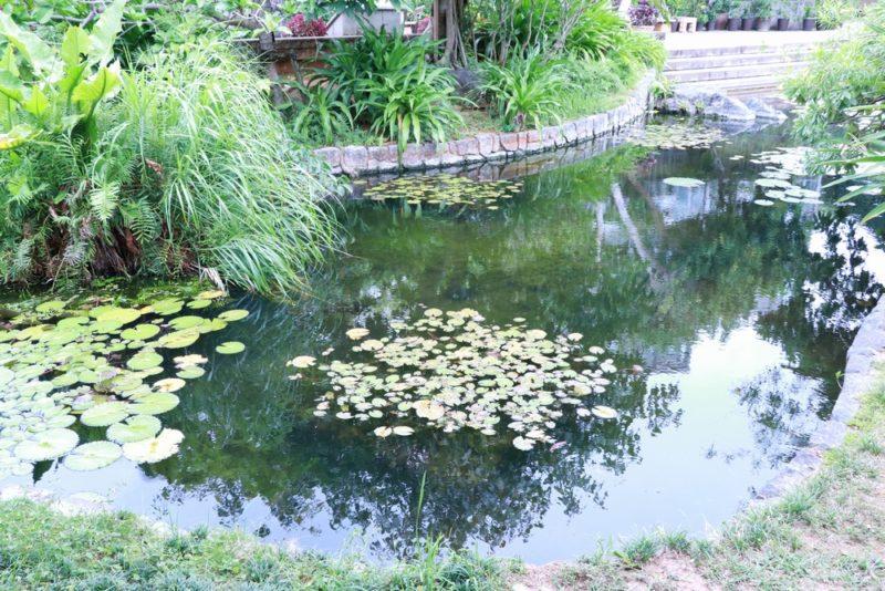 熱帯ドリームセンターの池にはアロワナが泳いでいる。噛みつかれると危ないので子供連れのファミリーは特に注意