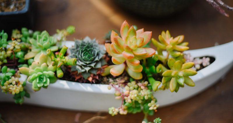 緑のある暮らしをサポートするメディア | 植物ノート