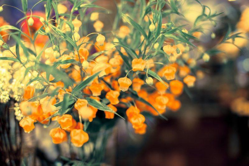 花瓶にもおすすめなサンダーソニアの花