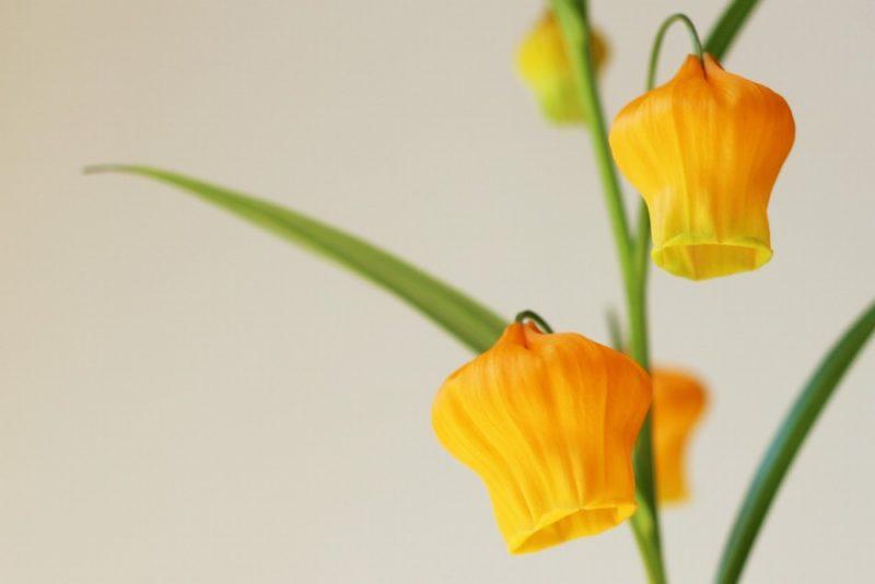 黄色いふっくらした花が魅力的なサンダーソニア