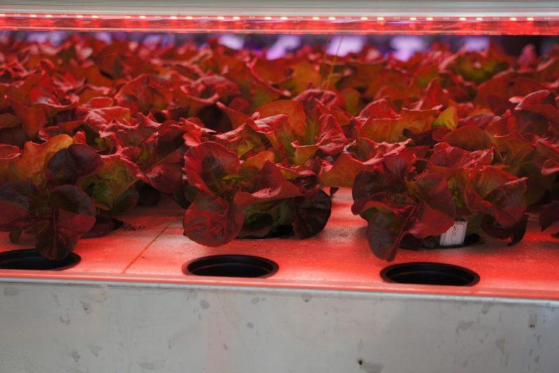 植物育成用のLEDライト