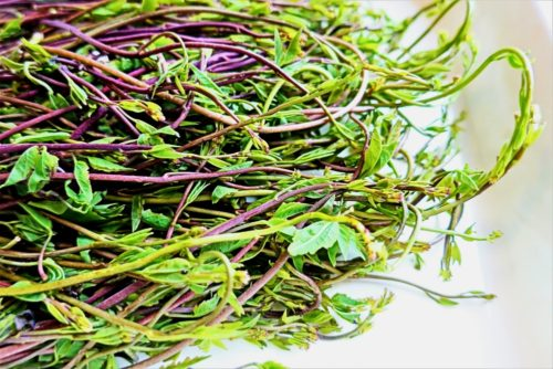 アケビの新芽は山菜としても食べられており、やや苦味がある